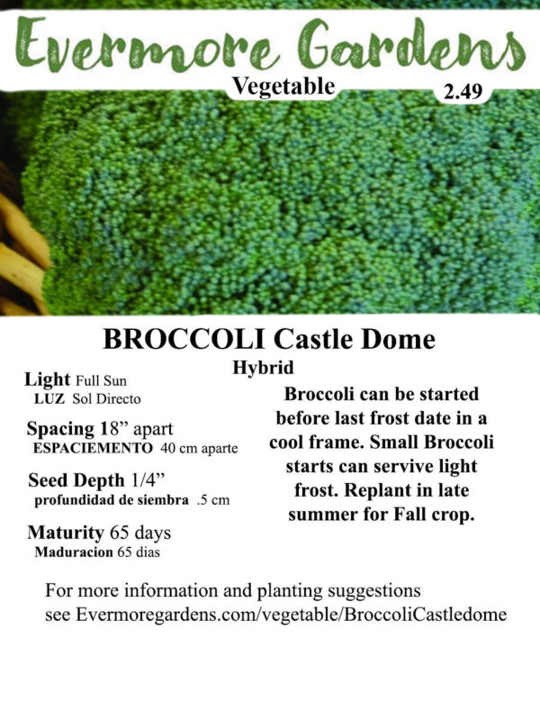 Evermore Gardens Broccoli Castle Dome Broccoli Hybrid Seeds