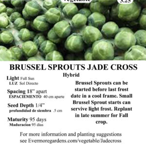 Evermore Gardens Brussel Sprouts Jade Cross Brussel Sprouts Hybrid Seeds