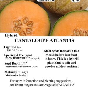 Evermore Gardens Cantaloupe Atlantis Cantaloupe Atlantis Hybrid Seeds