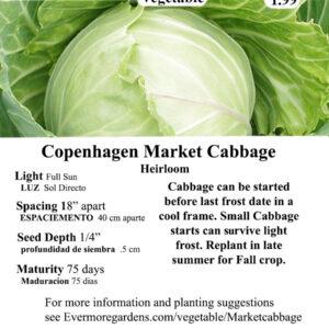 Evermore Gardens Copenhagen Market Cabbage Copenhagen Market Cabbage Heirloom Seeds