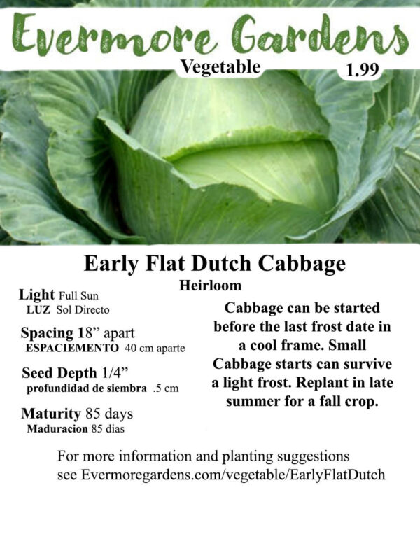 Evermore Gardens Early Flat Dutch Cabbage Early Flat Dutch Cabbage Heirloom Seeds