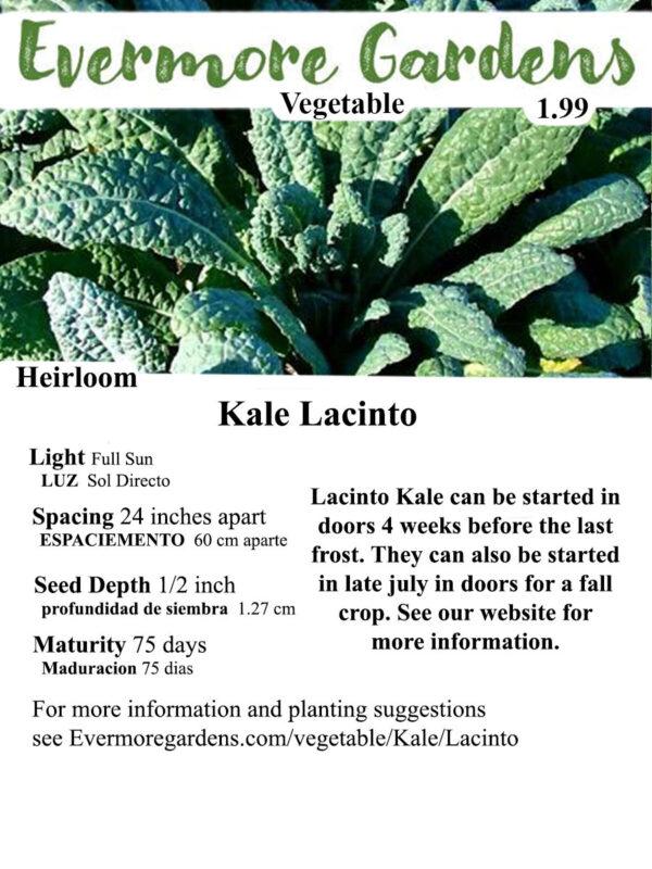 Evermore Gardens Lacinto Kale Lacinto KaleHybrid Seeds