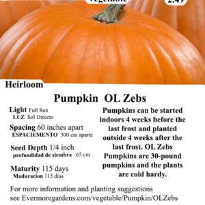 Evermore Gardens OL Zebs Pumpkin OL Zebs Pumpkin Heirloom Seeds