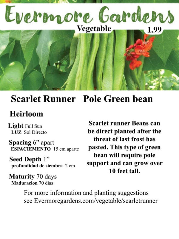 Evermore Gardens Scarlet Runner Green Bean Scarlet Runner Green Bean Heirloom Seeds