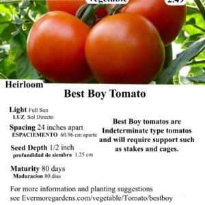 Evermore Gardens Best Boy Slicer Tomato Best Boy Slicer Tomato Heirloom Seeds