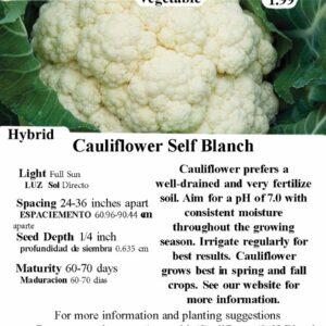 Evermore Gardens Cauliflower Self Blanche Hybrid Seeds