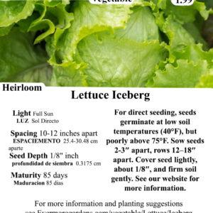 Evermore Gardens Iceberg Lettuce - Head, Green Lettuce Heirloom Seeds