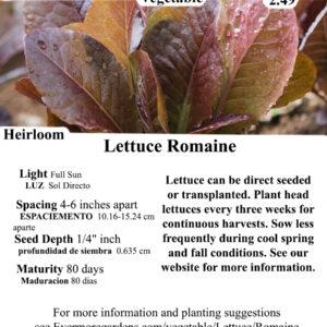 Evermore Gardens Romaine Lettuce -Red Lettuce Heirloom Seeds